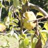 Bocaux de POIRES au naturel – Abbaye de Rosans - 710 g de Epicerie fine