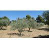 Huile d'olive de l'Abbaye de Jouques de Epices & condiments