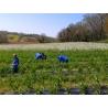PLANTE DE MAYLIS - TISANE 30g - coffret carton de Boissons - Thés - Tisanes