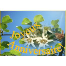 Carte anniversaire de Anniversaire, fêtes, mariage...
