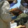 savon au miel et à l'huile d'olive de l'Abbaye de Jouques de Douche