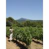 Ventoux Saint-Alric de Vins & Spiritueux